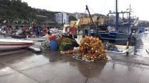 AV YASAĞI - Karadenizli Balıkçılar Yeni Sezondan Umutlu