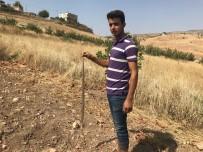 ARAFAT - Köylülerin Yılan Tedirginliği