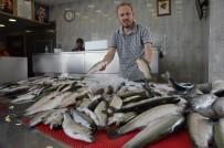 1 EYLÜL - Balıkçıların Umudu 'Palamut'