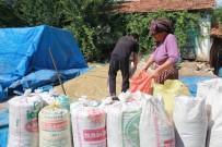 DOLU YAĞIŞI - Buğday Ve Arpa Rekoltesinde Yüzde 50 Düşüş