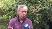 LEVENT ŞAHİN - 'Fındık İçin 14-15 Lira Yüksek Bir Rakam Değil'