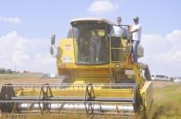 ŞEREFIYE - Kadın Çiftçilerin Hasat Sevinci