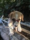 SUÇ DUYURUSU - Kuşadası'nda Odunla Köpeği Döverek Bu Hale Getirdiler