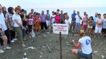 DENİZ KAPLUMBAĞALARI - Mersin'de Yavru Kaplumbağalar Denizle Buluştu