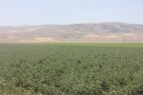 Tarım Sektörüne Yatırımlar Sürüyor