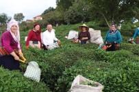 AK Parti Giresun Milletvekili Öztürk'ten  Çay Üreticilerine Destek