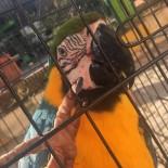 Belediye Ekipleri Papağan Ve Köpeği Kurtardı