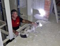 Asansör Boşluğuna Düşen Köpeği İtfaiye Kurtardı