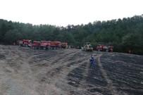 Bolu'da 2 Hektarlık Orman Arazisi Yangında Zarar Gördü
