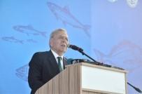 BALIK SEZONU - İzmirli Balıkçılar 'Rastgele' Diyecek