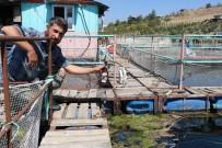 Kahramanmaraş'ta Çevre Kirliliği