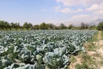 MUSTAFA YAVUZ - Niğde Beyaz Lahana Üretiminde Türkiye Birincisi