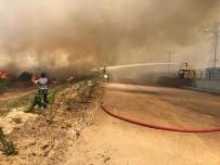 ZEYTINLIK - Aliağa'Da Çıkan Yangının Bilançosu Belli Oldu