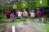 TURNA BALIĞI - Çivril'de 'Işıklı Gölünün Balıkçı Kadınları' Projesi Hayata Geçirildi