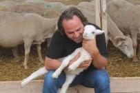 Fransız Koyunuyla Et Verimini 3'E Katlıyacak