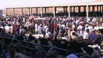 PAZAR ESNAFI - Hayvan Pazarlarında 'Kurban' Hareketliliği