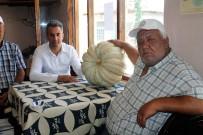 KAZANCı - Kızıldamlar 'Geleneksel Kestane Kabağı Festivali'Ne Hazırlanıyor