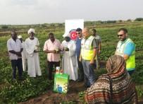 DARFUR - TİKA'dan Sudanlı Çiftçilere Tohum Desteği
