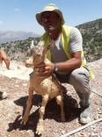 DAĞ KEÇİSİ - Yavru Dağ Keçisi Mermer Ocağının Çamuruna Saplandı