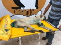 FEVZIPAŞA - Sapanca'dan Sonra Gaziantep'te Yürek Burkan Köpek Görüntüsü