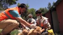 SOKAK KÖPEĞİ - Sokak Köpeği 'Moniş' Şefkat Eliyle Hayata Tutundu