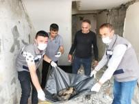 ŞEREFIYE - Yavru Köpekler Koruma Altına Alındı