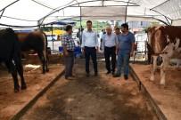 DEZENFEKSİYON - Çorlu'da Kurban Satış Merkezi Hazır
