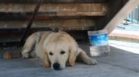 İNTIHAR - Sahibini Bekleyen Köpek Merdiven Altından Ayrılmıyor