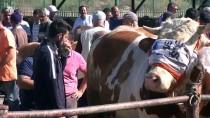 TOSUNLAR - Bayburt'ta Hayvan Pazarında 'Kurban' Hareketliliği