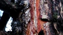 YILDIRIM DÜŞTÜ - Bolu'da Ormanlık Alana Yıldırım Düştü