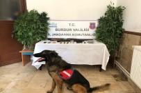 Dedektör Köpekli Uyuşturucu Operasyonu