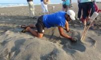 EROZYON - Hatay'da Yavru Caretta Carettalar Denizle Buluştu