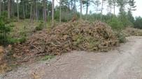 ELEKTRİK ÜRETİMİ - Orman Atıklarından Enerji Üretiliyor