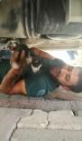 YAVRU KEDİ - Otomobilin Motor Kısmına Sıkışan Kediyi Vatandaş Kurtardı