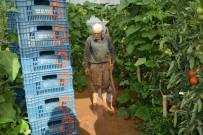 ESKIHISAR - Sel Sonrası Seralara Giren Üreticileri Gördükleri Manzara Üzdü