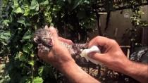 YAVRU KEDİ - Annesiz Kedi Yavrularını Şırıngayla Besliyor