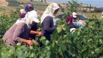 MUSTAFA COŞKUN - Erbaa Asma Yaprağına Yurt Dışından Talep Arttı