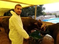 SELAHADDIN EYYUBI - (Özel) Genç Avukat, Kurban Satış Alanında Satıcılık Yapıyor