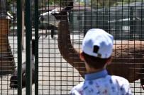ÇALIŞAN ÇOCUKLAR - Sokakta Çalışan Çocuklar Evcil Hayvanlar Parkı'nda