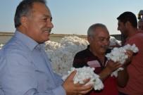 GÜLLÜBAHÇE - Türkiye'nin Pamuk Ambarı Söke'de İlk Pamuk Hasadı Yapıldı