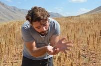 BEBEK MAMASI - Elbistan'da 'Astronot Gıdası' Kinoanın İlk Hasadı Yapıldı