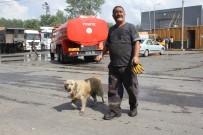 GERİ DÖNÜŞÜM - İşçilerin Sahiplendiği Köpek, Atık Fabrikasında Çıkan Yangında Tahliye Görevlisi Gibi Çalıştı