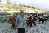 ASI NEHRI - Suyu Çekilen Asi Nehri Küçükbaş Hayvanların Mekanı Oldu