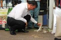 HAYVAN SEVERLER - Başkan Akın'dan Sokak Hayvanları İçin Proje