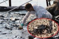 DENİZ CANLILARI - Foça'da Denizdeki Kirlilik Havadan Görüntülendi