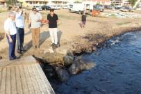 FUEL OIL - Foça'daki Petrol Kirliliğinde Bakanlık Yetkilileri Olay Yerinde