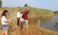 DENİZ CANLILARI - Kuşadası'nın Tek Sulak Alanı Kocagöl Mahalli Sulak Alanı İlan Edilecek