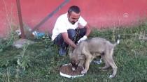 Ayakları Tutmayan Yavru Köpek Tedaviyle Sağlığına Kavuştu