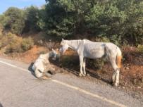 EĞİTİM DERNEĞİ - Büyükada'da Yaralı Halde Can Çekişen At Yürekleri Sızlattı