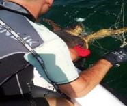 Caretta Carettayı Sahil Güvenlik Kurtardı
